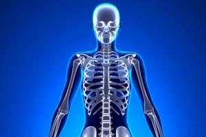 Illustration de l'article sur le capital osseux